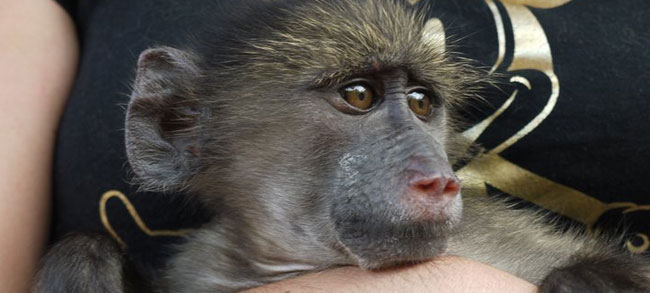 MONKEY Rehabilitation